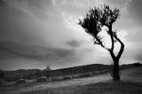 treesBW studio-3605