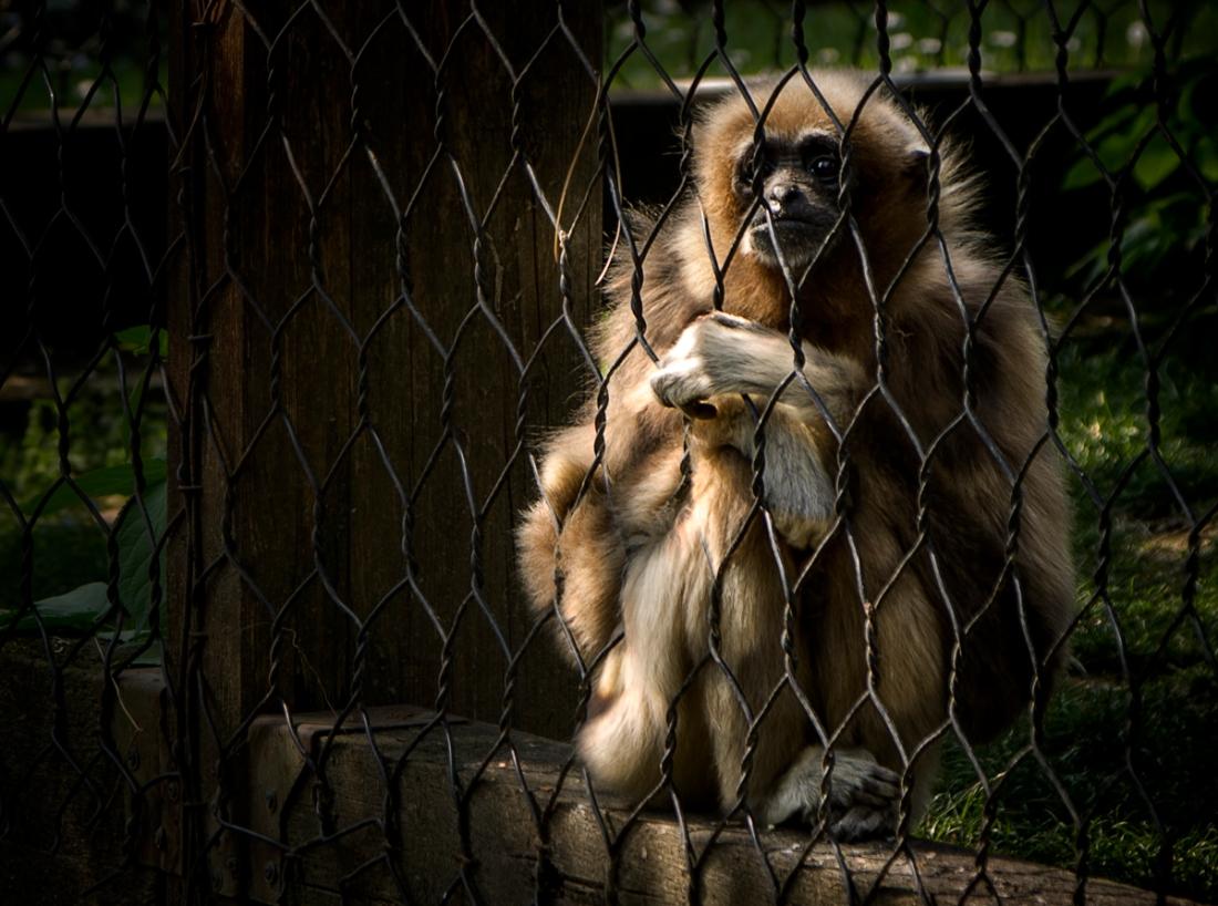 cornelle zoo bergamo italy silvia casali copyright 2015